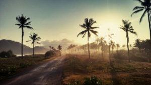 Sun through palm trees